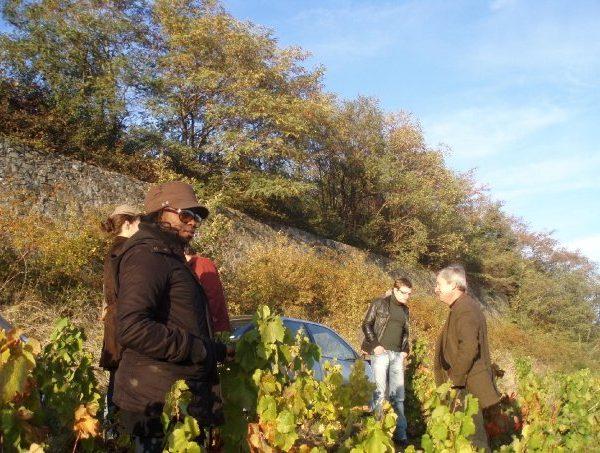Une Nenette du vin dans le vignoble 11