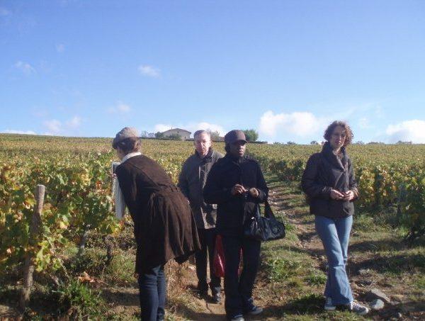 Une Nenette du vin dans le vignoble 14