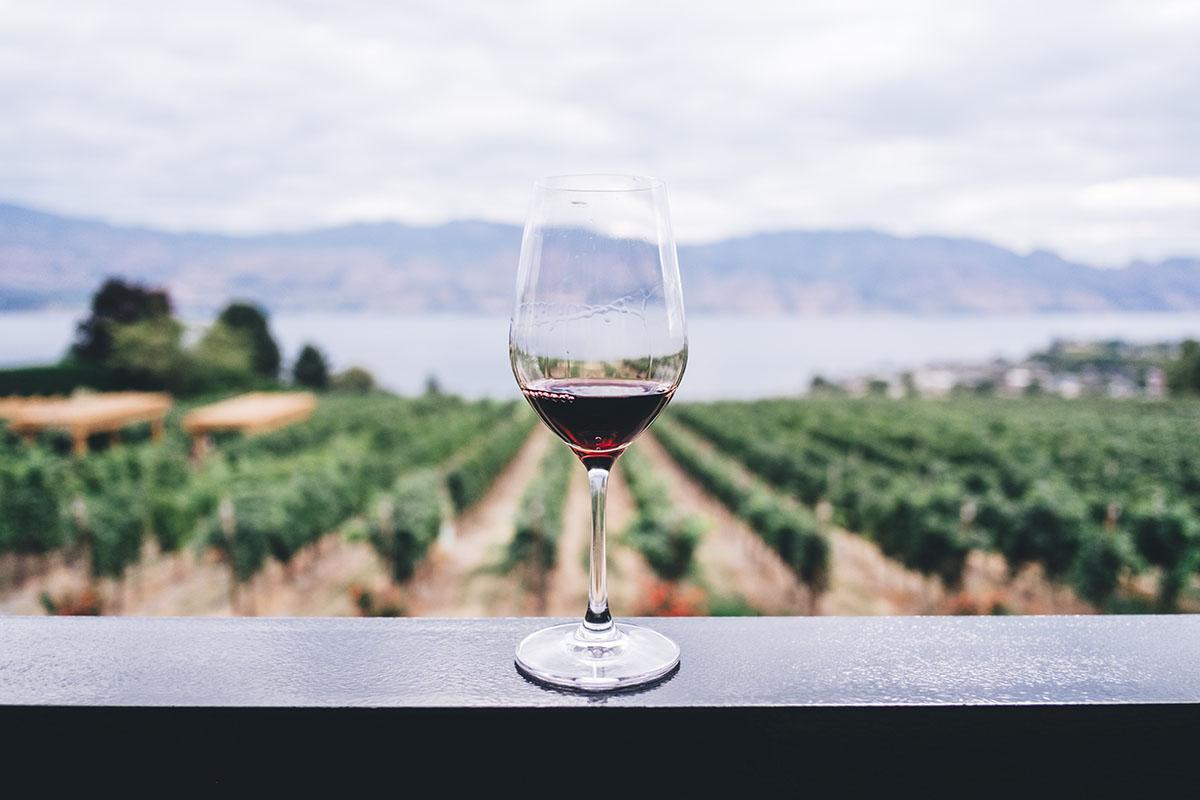 route des vins en Afrique du sud par les nenettes du vin
